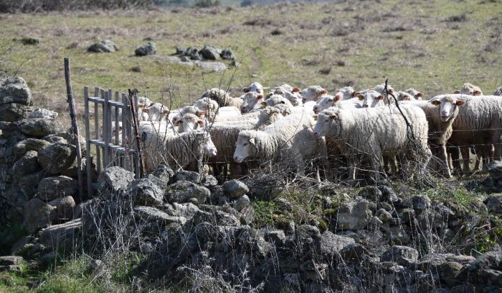 puerta-ovejas